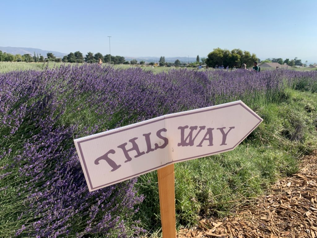This Way, Sign in The Lavender Fields