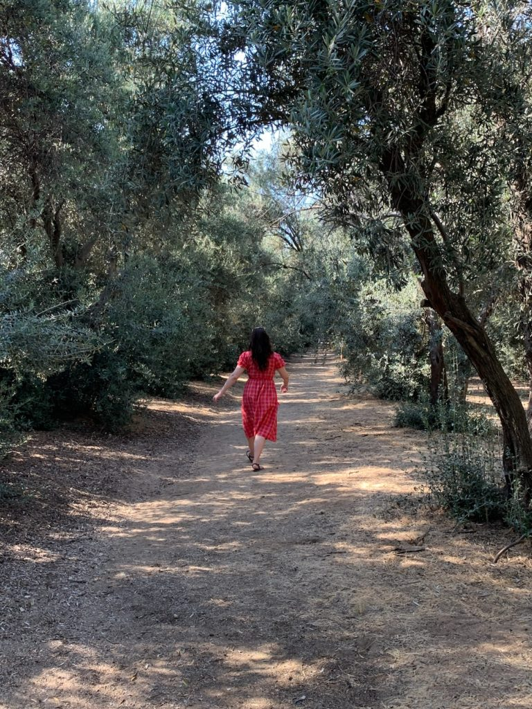 Linds walking in a tunnel of olive trees at the lavender fields